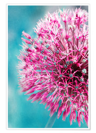 Poster Premium Allium in Pink