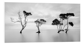 Forex  Tree silhouettes winding over a lake - Steven Fudge