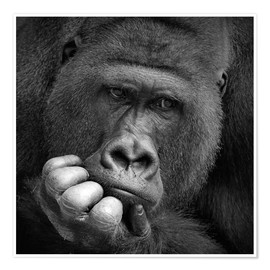 Antje Wenner-Braun - thoughtful gorilla