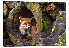 Stampa su tela  Fox in a hollow trunk - Cees Ginkel