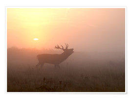 Poster Premium Misty morning stag