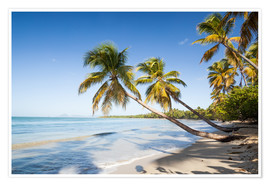 Poster  Famous Les Salines tropical beach with palm trees, Martinique, Caribbean - Matteo Colombo