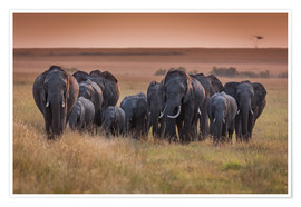 Poster Premium Elephants in the morning light