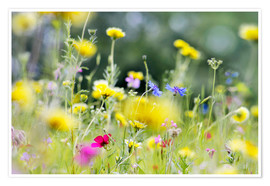 Poster Premium Summer Meadow with blooming wild Flowers