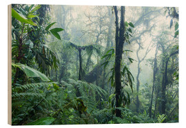 Matteo Colombo - Rainforest in Costa Rica