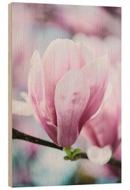 Stampa su legno  Closeup of blossoming magnolia in spring - Peter Wey