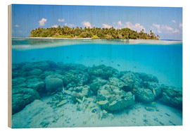 Legno  Reef and tropical island, Maldives - Matteo Colombo