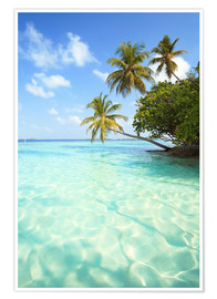 Poster Premium Turquoise sea and palm trees, Maldives