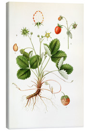 Stampa su tela  Strawberry - Carl Axel Magnus Lindman