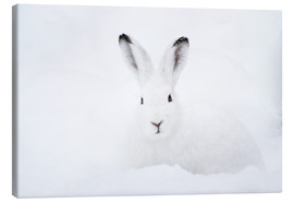 Stampa su tela  Mountain hare in winter - Peter Wey