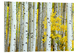 Forex  birch forest - Rob Tilley