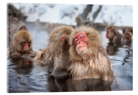 Vetro acrilico  Japanese Snow Monkeys in Nagano - Jan Christopher Becke