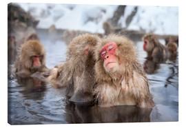 Stampa su tela  Japanese Snow Monkeys in Nagano - Jan Christopher Becke