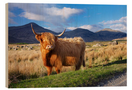 Legno  Highland cattle, Isle of Mull - Patrick Dieudonne