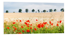 Stampa su schiuma dura  Poppies on the sidelines - Matthew Williams-Ellis