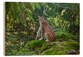 Stampa su legno  Lynx in the Bavarian National Park - Roberto Moiola