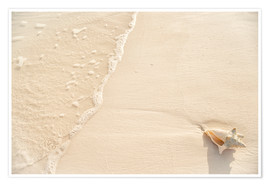 Poster Premium  Washed up conch on shore - Kim Walker