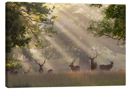 Stampa su tela  Deer in morning mist - Stuart Black
