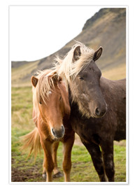 Poster Premium  Horses, South Iceland, Northern Europe