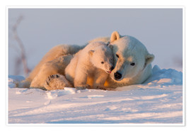 Poster  Polar bear and cub, Wapusk National Park - David Jenkins