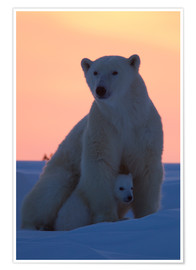 Poster Premium  Polar bear and cub - David Jenkins