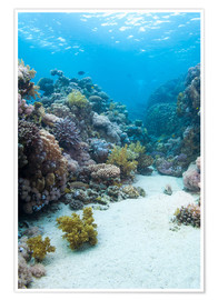 Poster Premium  Coral reef in blue water - Mark Doherty