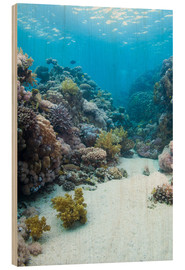 Stampa su legno  Coral reef in blue water - Mark Doherty
