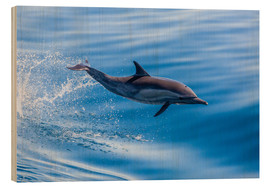 Stampa su legno  Long-beaked common dolphin leaping - Michael Nolan