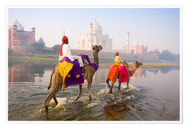 Poster Premium  Camel riders at the Taj Mahal - Gavin Hellier