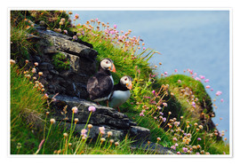 Poster Premium Puffins, Orkney Islands