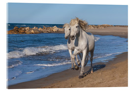 Stampa su vetro acrilico  Camargue horses on the beach