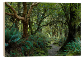 Stampa su legno  Primeval forest on kepler track, fiordland, new zealand - Peter Wey