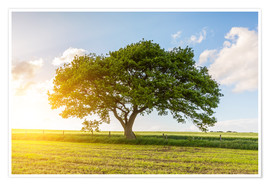 Poster Premium The oak tree in summer