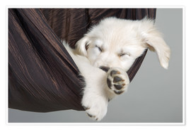Poster Premium Sweet Dreams Golden Retriever 2