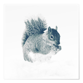 Poster Premium squirrel
