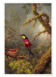 Poster Premium  A pair Rotnacken topaz hummingbird - Martin Johnson Heade