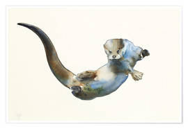 Poster Premium  Floating Otter - Mark Adlington