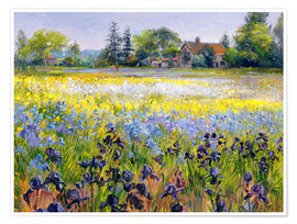 Poster Premium field of flowers