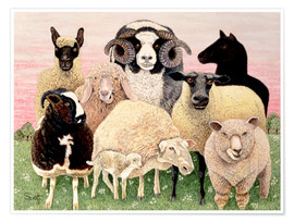 Poster Premium  several sheeps - Pat Scott