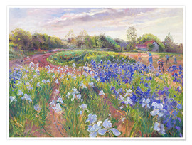 Poster Premium  Field of flowers - Timothy Easton