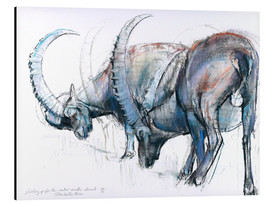 Stampa su alluminio  Ibex searching food - Mark Adlington