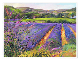 Poster Premium  Lavender field - Timothy Easton