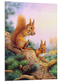 Stampa su PVC  Pair of Red Squirrels on a Scottish Pine - Carl Donner