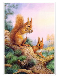 Poster Premium  Pair of Red Squirrels on a Scottish Pine - Carl Donner