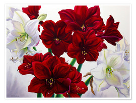 Poster Premium  Amaryllis rosso e bianco, 2008 - Christopher Ryland