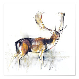 Poster Premium Study of a Stag