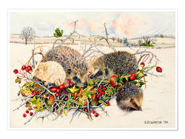 Poster Premium  Hedgehogs in Hedgerow Basket - E.B. Watts