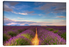 Stampa su tela  Fields of Lavender, Provence - Circumnavigation