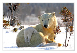 Poster  Mother Polar Bear - Richard Wear