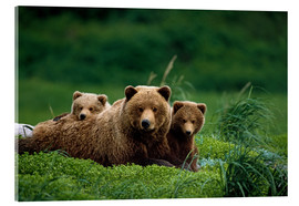 Stampa su vetro acrilico  Grizzly Bear Mother and Cubs - Jo Overholt